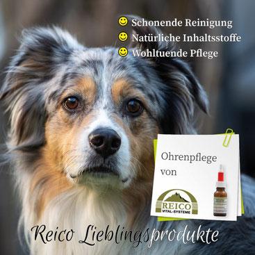 Pflegeprodukte für Hunde - Ohrenpflege