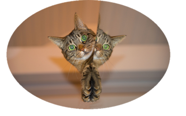 Katze beim Tierarzt