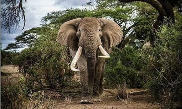 Tim, from Amboseli, Kenya