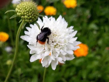 Ergebnisse Insektenzählung Sommer 2020