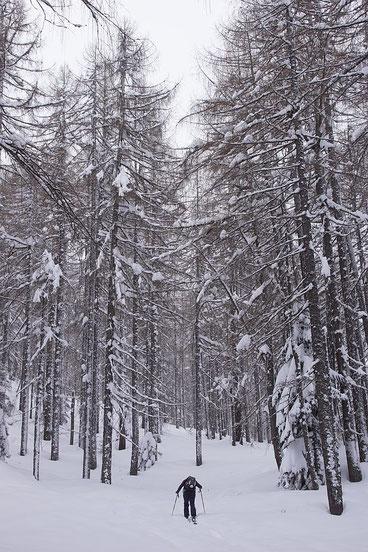 Im Lärchenwald unter der Mitzl-Moitzl-Hütte