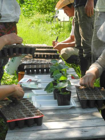 植物の育て方の基本形から応用まで、小人数ならではのケアをします。