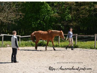 Travail à pied Harmoniecheval équitation éthologique
