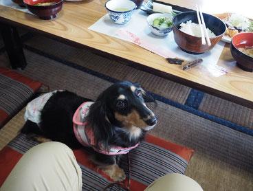 かーちゃんは私のお昼を置いてきちゃったので、いただいたオヤツで我慢なのだ