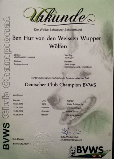 Deutscher Champion Club BVWS