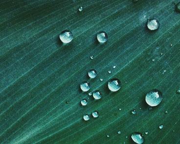 Wasser perlt einfach von der Kork-Oberfläche ab - Wie von diesem Blatt