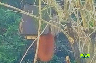 Vogelfutterhäuschen mit Eichhörnchen, von dem nur sein buschiger Schwanz zu sehen ist von K.D. Michaelis