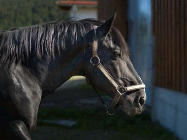 Pferdeparadies Palmetshofer