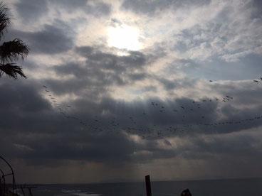 冬によく見る光景の渡り鳥~