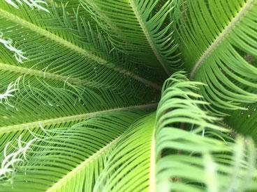 新緑がキレイな時ですね! さて、明日ぐらいからNoulさんからのお届けもが届くかしら・・♪