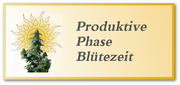 Blüte & produktive Phase