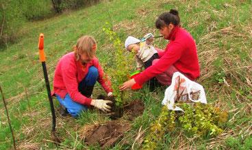 Eine Familie pflanzt einen Baum in Slavnoje (www.Slavnoje.com)