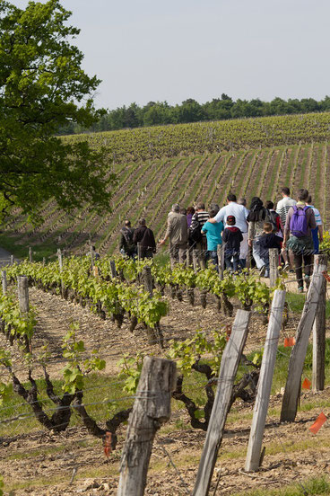 guided-walk-tour-in-Vouvray-vineyard-wine-tasting-Loire-Valley-Amboise-Tours-wine-tours-Myriam-Fouasse-Robert