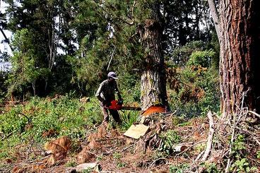 Foresta del Monte Kenya 16 gennaio 2018. I fautori della deforestazione commerciale minacciano di denunciare gli ambientalisti per diffamazione, insistendo sul fatto che le loro azioni di disboscamento sono pienamente legali.
