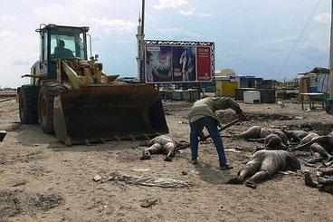 La raccapricciante immagine di vittime sud sudanesi mentre vengono caricate su una ruspa