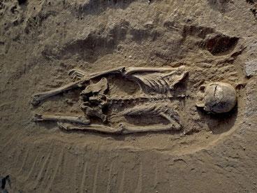 Lo scheletro di un uomo rinvenuto a Nataruk, sull'antica sponda del lago Turkana,  è la più antica scoperta di un massacro preistorico .