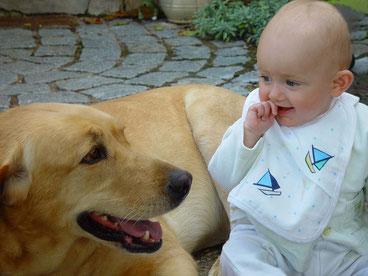 La zoothérapie est l'intervention Professionnelle en Médiation Animale.
