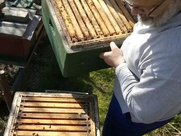 #Bienen #Imkern #Durchsicht eines Bienenvolkes