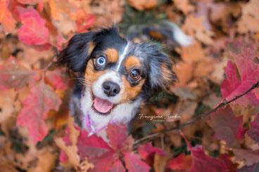 Franziska Spohn Fotografie - Outdoorshooting, Tierfotografie, Hundefoto, Herbstfoto, 2 verschiedene Augenfarben