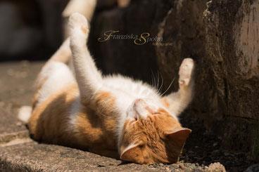 Franziska Spohn Fotografie - Tierfotografie, Katzenfotografie, Outdoorshooting, spielende Katze, rote Katze