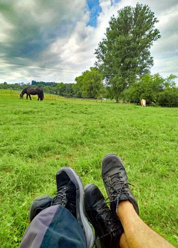 Sonntag vormittags: auf der Weide mit Blick auf die Rösser