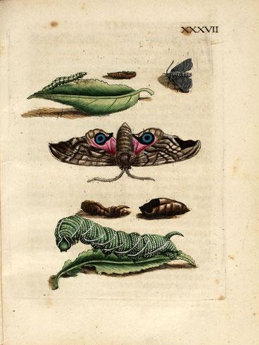 Bild verlinkt zu Wikimedia Opensource- Quelle
