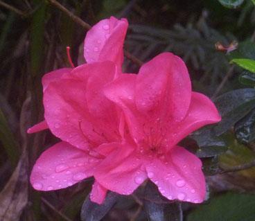 Pinke Blüte Führung und Botschaften der Engel