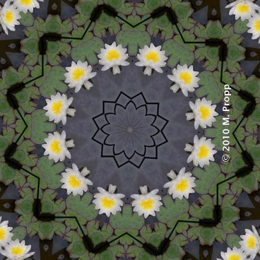 Seerosen-Mandala