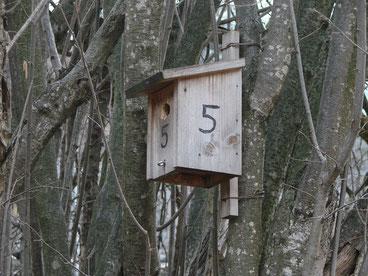 Eine Nisthilfe für Singvögel, die in Höhlen brüten wie z.B. diverse Meisenarten (Ueli Bühler)