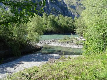 Dank der Rheinaufweitung gibt es hier wieder Kiesinselbänke, auf denen der Flussuferläufer Nahrung findet (Ueli Bühler)