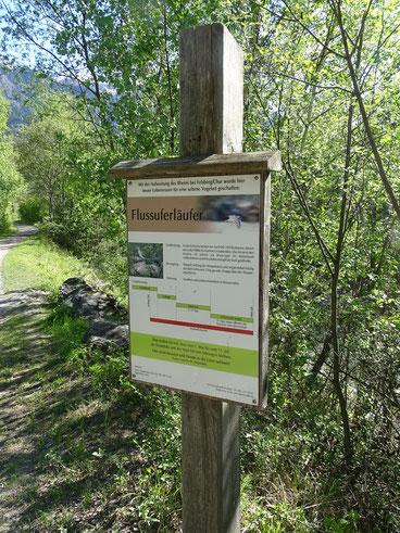 Zwei Tafeln von Vogelschutz Chur rufen zur Rücksichtnahme auf den Flussuferläufer aufmerksam (Ueli Bühler)