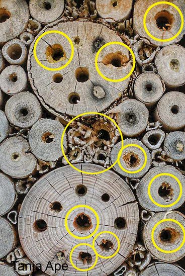 Insektenhotel Nisthilfe Insektennisthilfe Specht Vogelschutz Spechtschutz Maschendraht Kaninchendraht anbringen aufgehackte Gänge