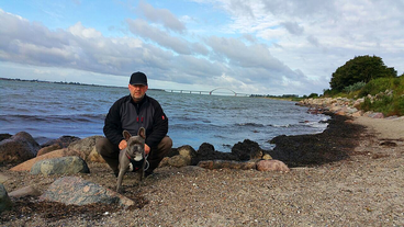 Ben mit Herrchen am Wulfener Strand ( Foto: Fam. K.)