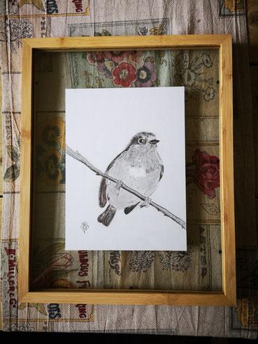 7 Robin...Pencel drawing 4 Potlood tekening ingelijst tussen twee glasplaten.