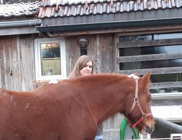 Craniosacral Therapie für Pferde