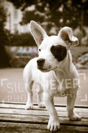 Outdoor, Hundefotografie, Hundefotos, Hundeshooting, Rotenburg, Wümme, Scheeßel, Bremen, Sottrum, Hamburg, Stade, Bispingen, Schneverdingen, Cuxhaven, Bremervörde