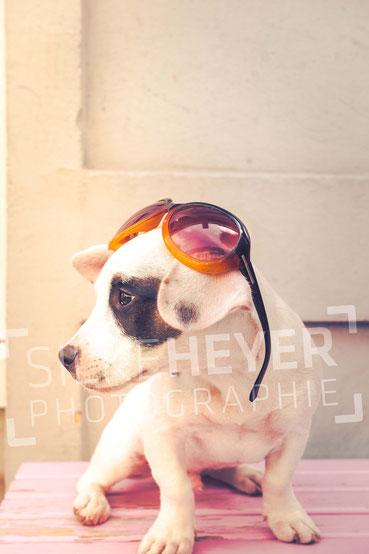 Hundeshooting, Tierfotografin, Hundefotografin, modern, zeitgemäß, Rotenburg, Wümme, Scheeßel, Niedersachsen, Verden, Sittensen, Bremerhaven, Ostfriesland, Norden, Bremen