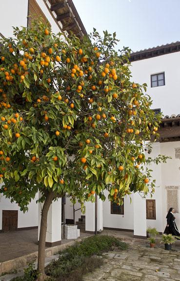 Patio de los Naranjos, Monasterio de Santa Clara