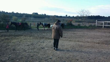 Cours hivernal poneys