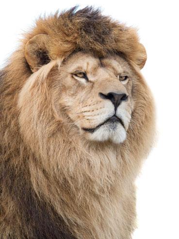 神獣の牙爪ネックレスライオン