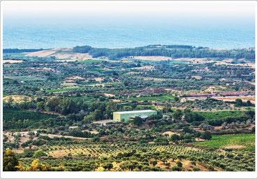 Veduta aerea della Fattoria San Francesco, tra ulivi secolari e vitigni, dinanzi al mar Ionio