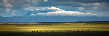 Herðubreið, Ódáðahraun, Icelandic Horse, Isländer, Riding, Kollóttadyngja, Iceland, Volcano, Viðiker