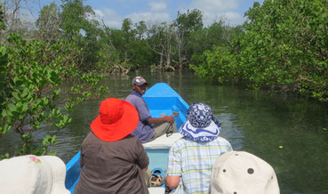 Ramisi River delta
