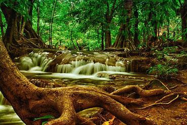 ドレッドが成長・変化していく様子は、木々の成長を連想させます。