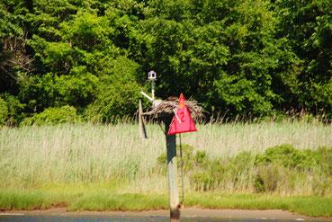 """""""Hausbesetzung"""" bei einem Seezeichen, ein Osprey hat es in Beschlag genommen"""