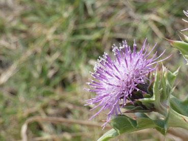 花の先っぽに花粉?のような粉が?