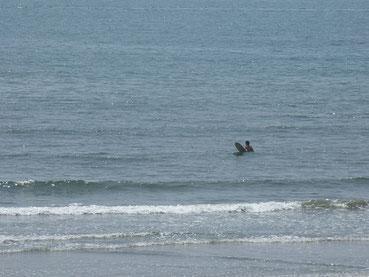 真夏日な今日も少し波有りましたね。