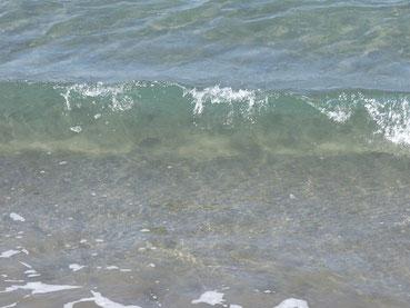 水澄んでてキレイでした~~