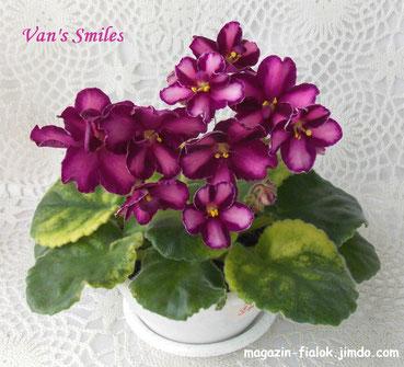 Van's Smiles (V.VanPatten)