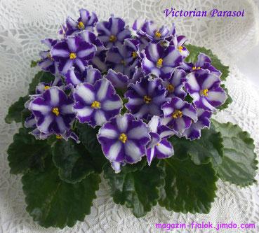 Victorian Parasol (P.Sorano)